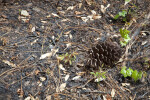 Pine Cone on Scorched Earth Surrounded by Pine Needles and Fallen Leaves