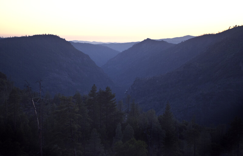 Pine Trees on the Slopes of the Hetch Hetchy Valley at Sunset