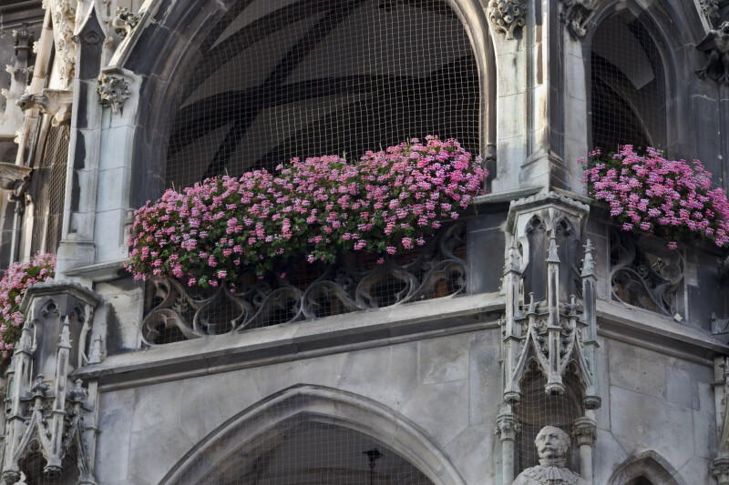 Pink Flowers on Balcony of New Town Hall