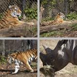 Pittsburgh Zoo photographs