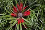Plant at San Fransisco Zoo