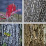 Plant Patterns & Textures photographs