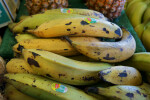Plantains at the Tampa Bay Farmers Markets