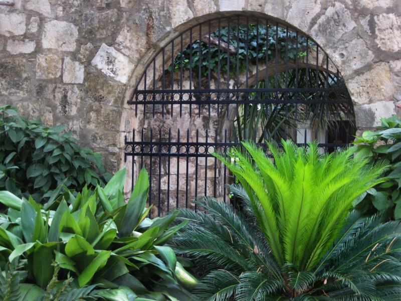 Plants and Window