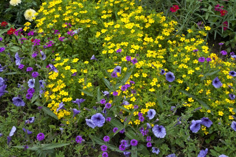Plants at Munich-Nymphenburg Botanical Garden