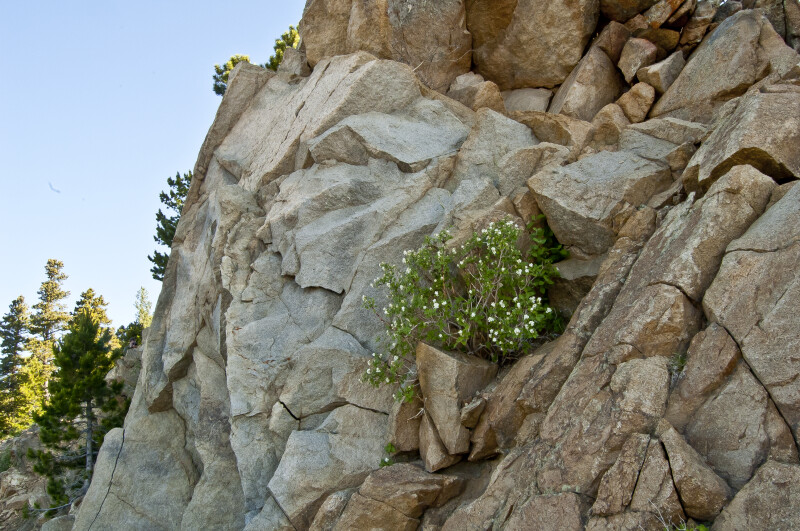 Plants Grow in Rocky Crevasse