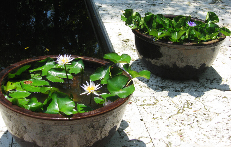 Plants in Bowls