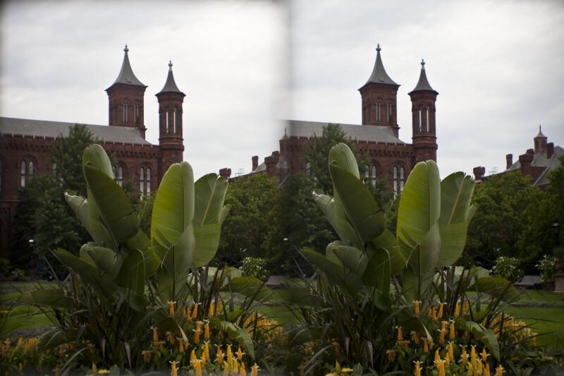 "Plants Outside ""The Castle"""