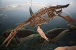 Pliosaur Skeleton