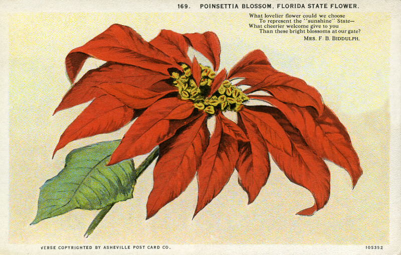 Poinsettia Blossom, the Florida State Flower