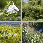 Poisonous Plants photographs