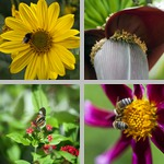 Pollinating photographs