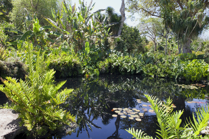 Pond and Vegetation