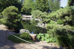 Pond at Japanese Garden