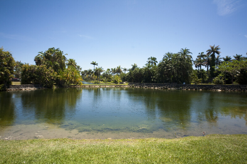 Pond at the Fairchild Tropical Botanic Garden