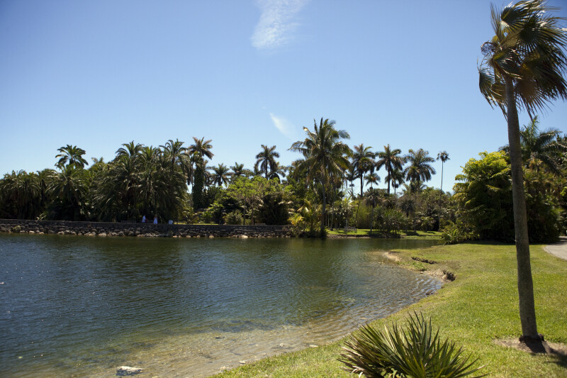 Pond at the Fairchild Tropical Botanical Garden