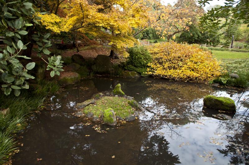 Pond with Mossy Rocks