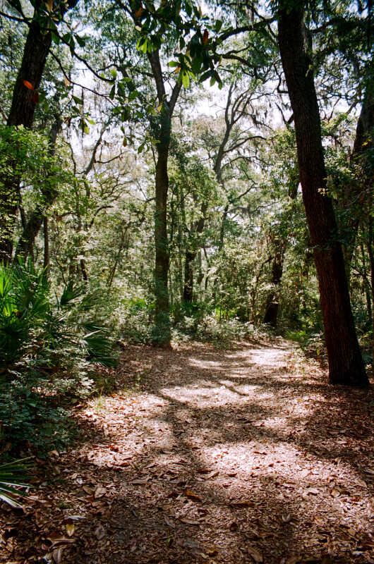 Portion of the Fort Caroline Nature Trail