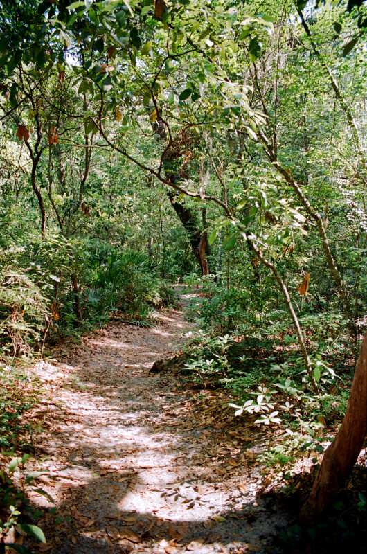 Portion of the Fort Caroline Nature Trail with Thin Trees and Low-Lying Shrubs