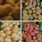 Potatoes photographs