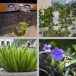 Potted Plants photographs