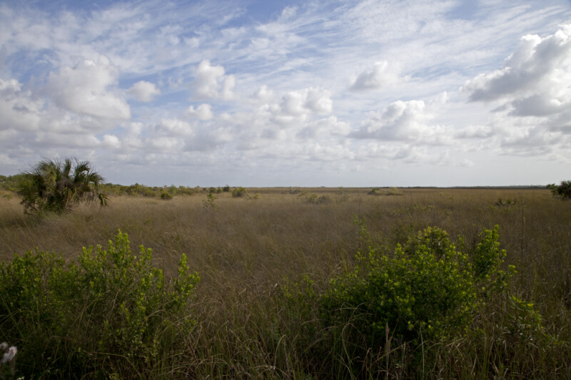 Prairie with a Few Trees and Shrubs at Anhinga Trail of Everglades National Park