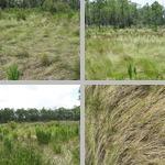Prairies & Grasslands photographs