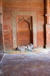 Prayer Rug Inside the Jami Masjid