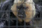 Primate Behind and Enclosure at the Sacramento Zoo