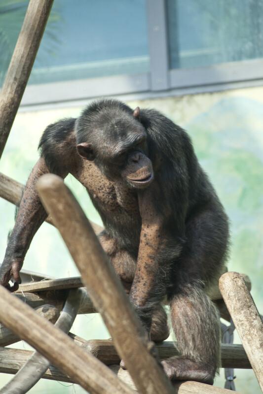 Primate on Posts