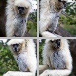 Primates photographs