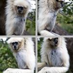 Primates photographs