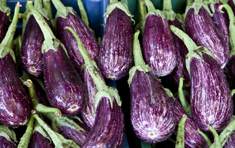 Purple-White Eggplants