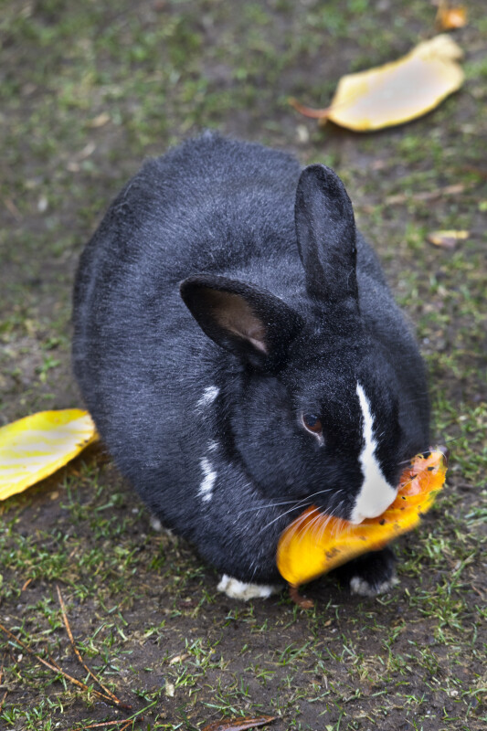 Rabbit with Leaf