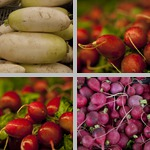 Radishes photographs