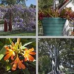 Rancho Los Alamitos photographs