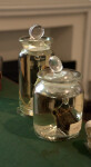Rats and Bats Preserved in Jars