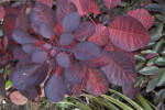 Red and Black Leaves Close-Up
