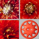 Red-Orange photographs