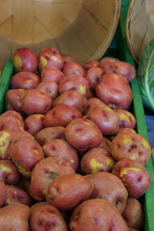 Red Potatoes at the Tampa Bay Farmers Market