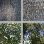 Redbox Gum Trees photographs