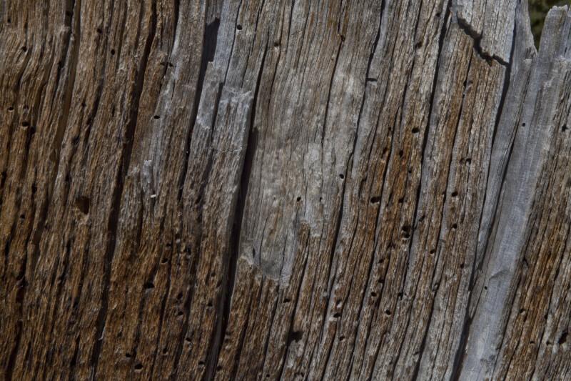 Reddish-Brown Bark over Gray Wood