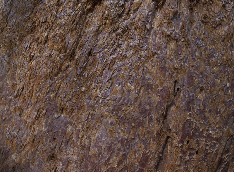Reddish Brown Tree Bark With Fibrous And Smooth Surfaces