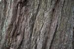 Redwood Bark Detailed View
