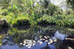 Reflected Vegetation Near a Pond