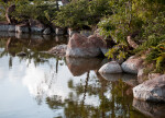 Reflective Pond with Reddish-Grey Rocks