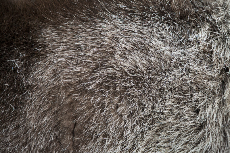 Reindeer's Fur