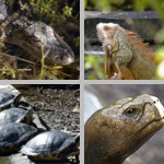 Reptiles photographs