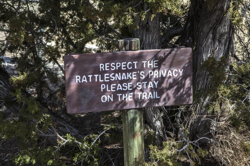 Respect the Rattlesnake