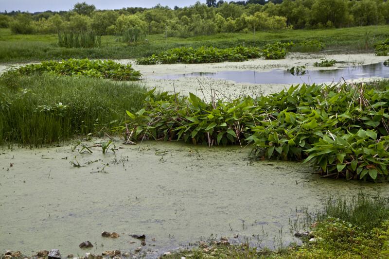 Restored Wetland area at Circle B Bar Reserve